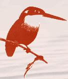 Kōtare cover image for v. 1. n. 1.